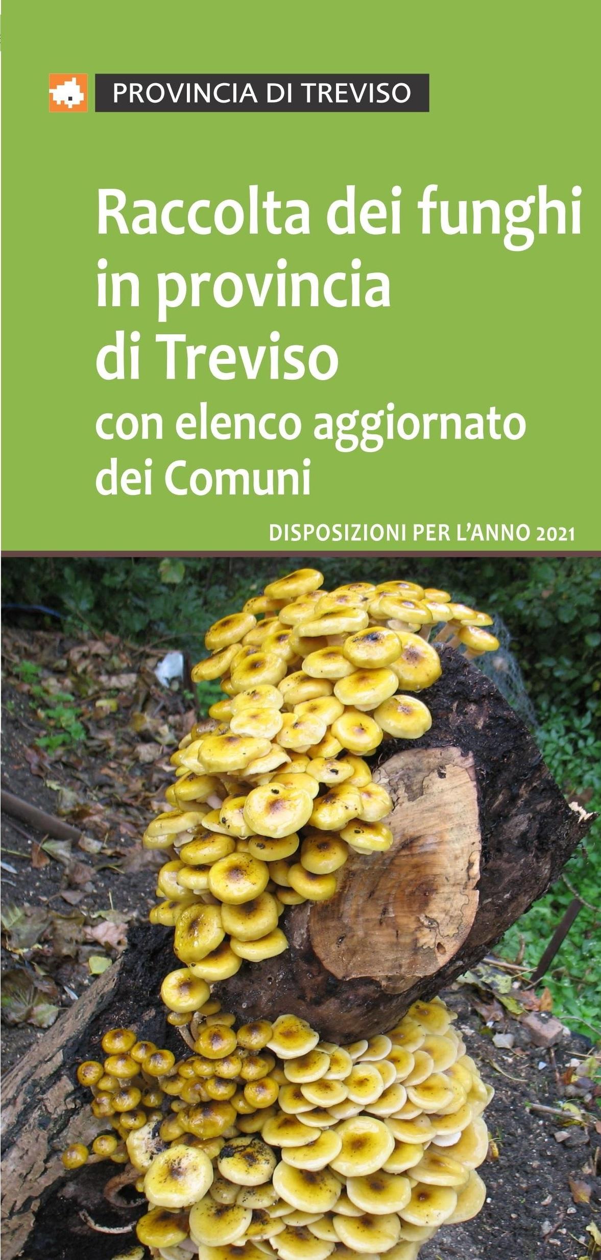Raccolta dei funghi in provincia di Treviso, disposizioni per l'anno 2021